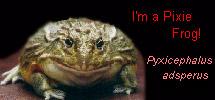 pixiefrog.jpg