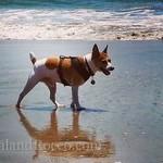 Loving Life at the Beach