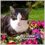 Farewell Dear Nerissa