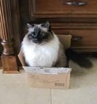 A Box Full Of Sukki!