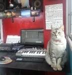 Cat & MIDI Studio